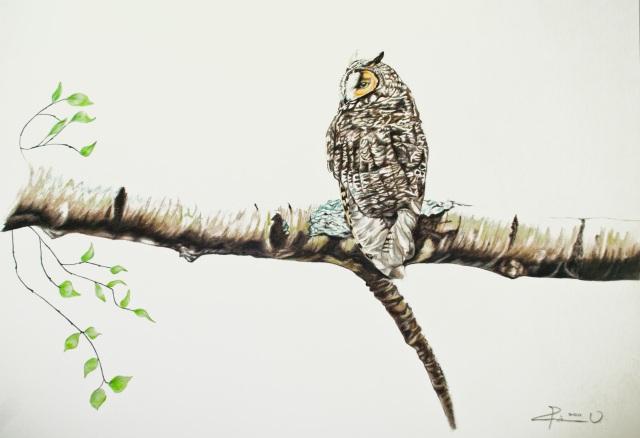 OwlDrawing