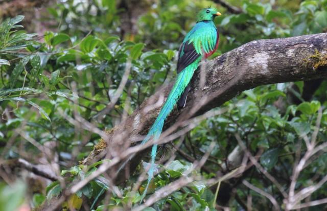 22314-monteverde-quetzal-2