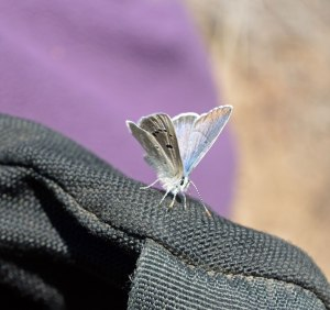 A butterfly sitting on my pack as I ate lunch wasn't a supernatural message.  The insect was warming up on heat absorbing dark fabric on a chilly day, and likely taking up mineral from sweat.
