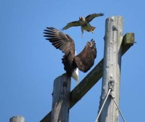 EagleHawk2