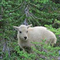 Another baby in good habitat.