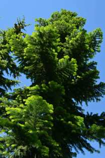Beautiful green new growth