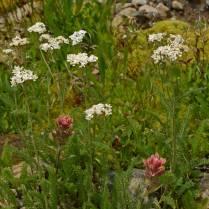 Flowers in a wet seep