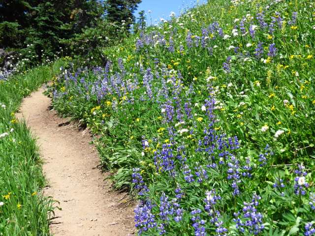 Garden on the Skyline Divide Trail. More pictures below!