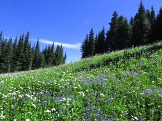 Skyline Divide Meadow