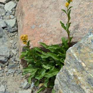 Flowers found a spot to grow between rocks.