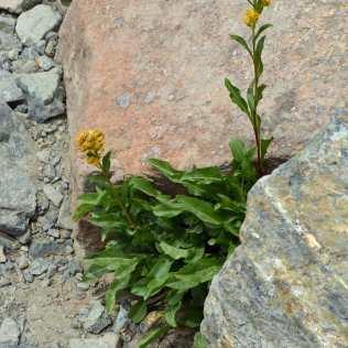 Flowers found a spot to grow between rocks.