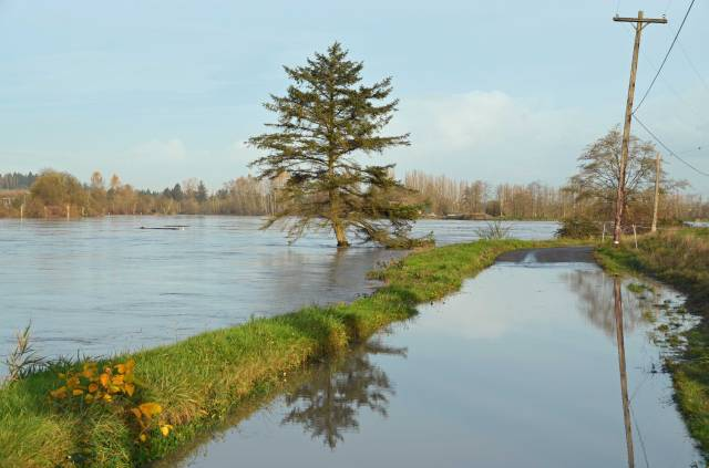 Flooded road and trooper of a fir tree