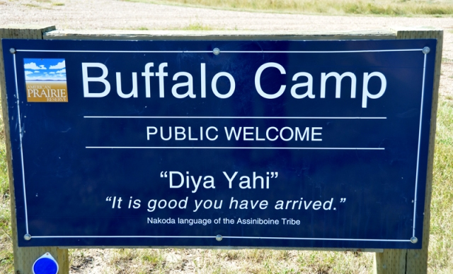 buffalocampsign