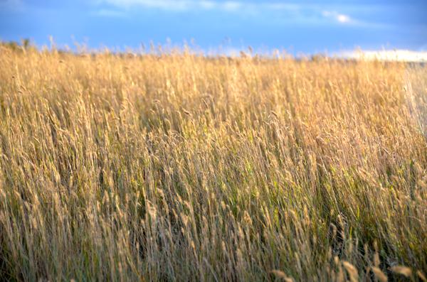 seaofgrass