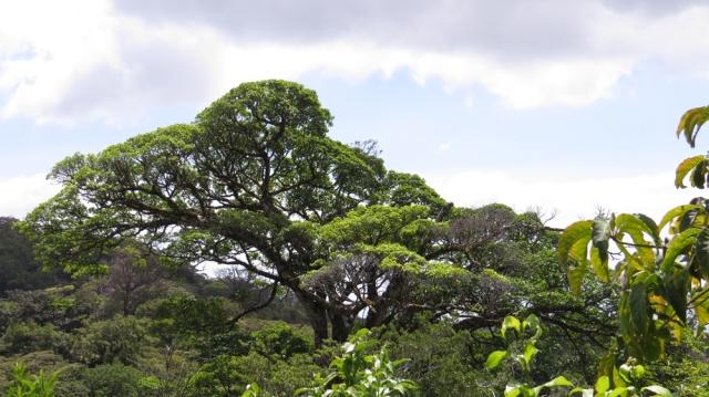 cabinasforest