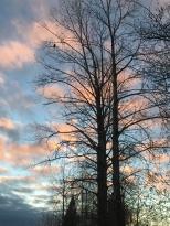 Eagle tree at dusk